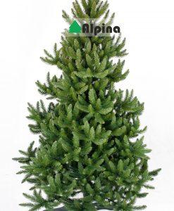 Коледна елха Alpina Див Смърч
